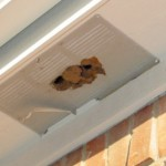 Blocked soffit vent blocks attic ventilation